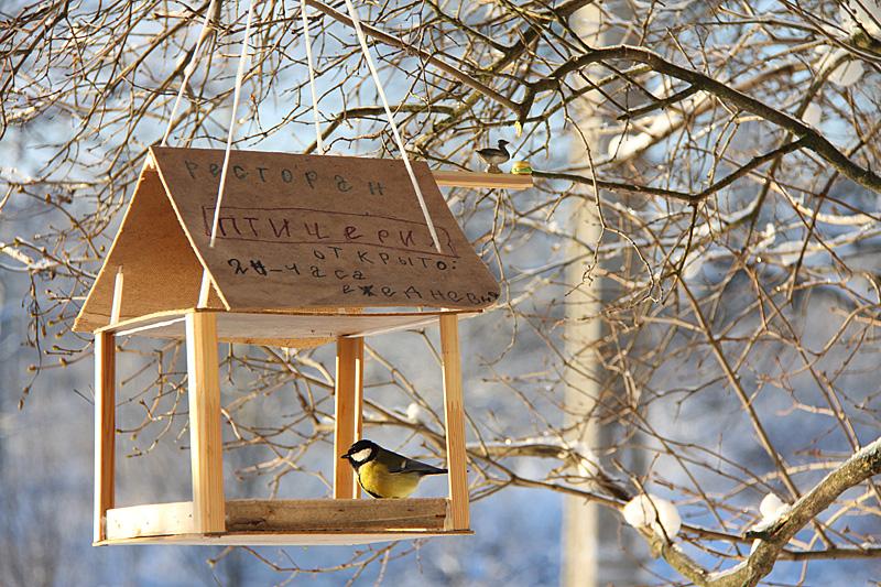 Фото кормушки для птиц своими руками